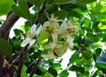 agrumes+fleur.jpg