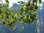 arbres-1.jpg