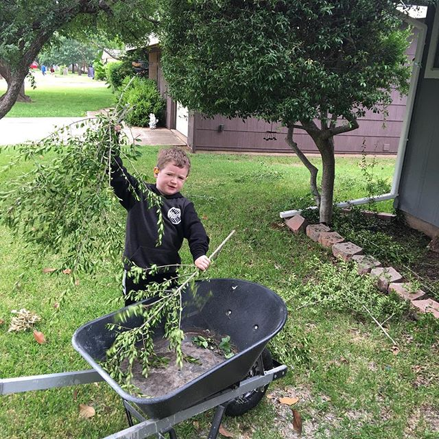 Put hero to work picking up twigs after I trimmed the tree. He wasn't thrilled about it, but he did like getting a ride in the wheelbarrow. 😄