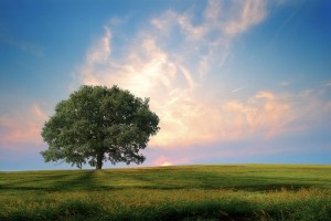 Coaching Louise Hay – Heal Your Life®
