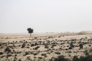A photo of the desert near Dubai. A lone tree stands in the foreground.
