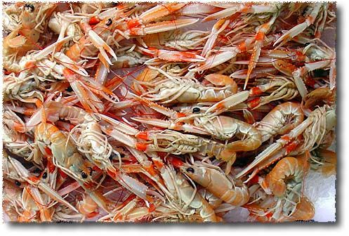 real-scampi