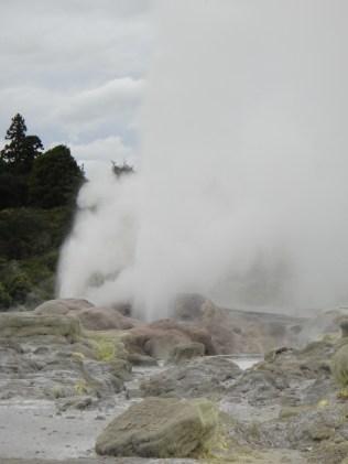 New Zealand. Pohutu Geyser, Te Puia, Rotorua.