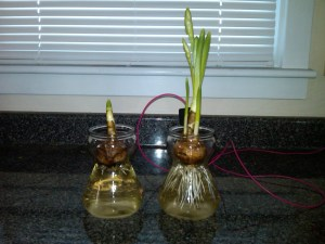affects of earthing or grounding on plants