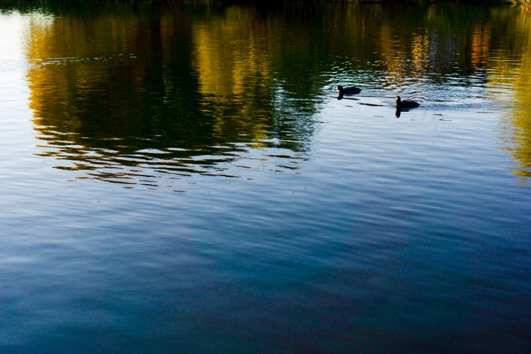 Reflection Ducks on a Pond, Arizona © 2019 ericarobbin.com | All rights reserved.