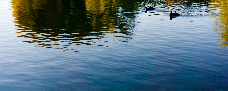 Reflection Ducks on a Pond, Arizona © 2019 ericarobbin.com | All rights reserved.