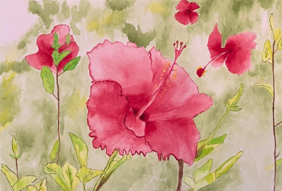 Hibiscus (watercolor)   Erica Robbin