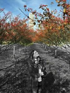 Autumn in Chicago | Erica Robbin