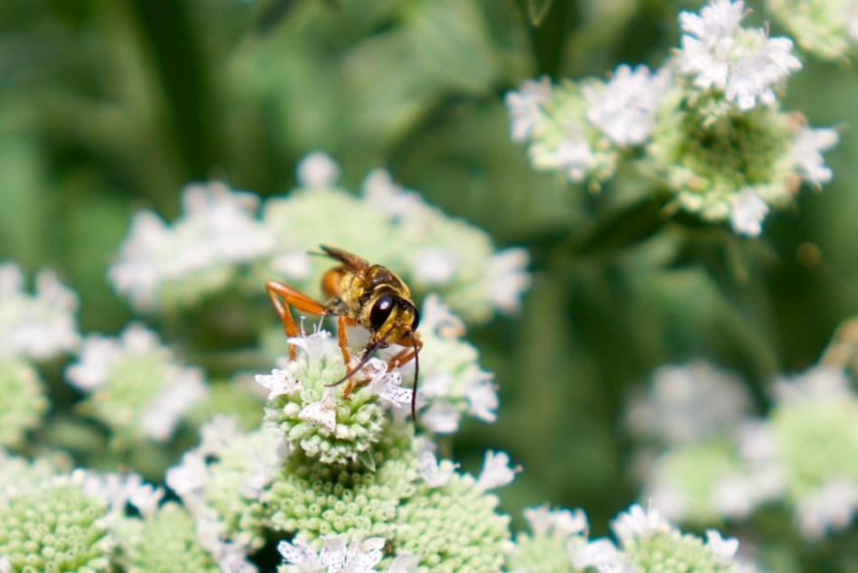Bee of Spring | Erica Robbin