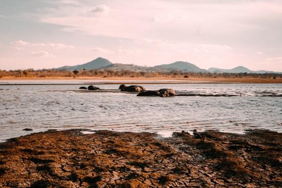 Hippo Group, Malawi, Africa | Erica Robbin