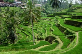 Tegalalang rice terraces, Bali