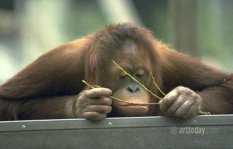 1wm_primates_009