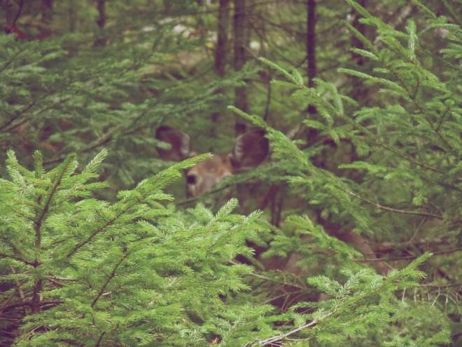 2012-09-05 Vacation - Maine-Acadia - Day 2 02