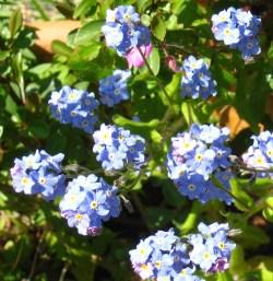 tiny blue sprigs