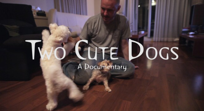 Charlie Kirk Two Cute Dogs Documentary