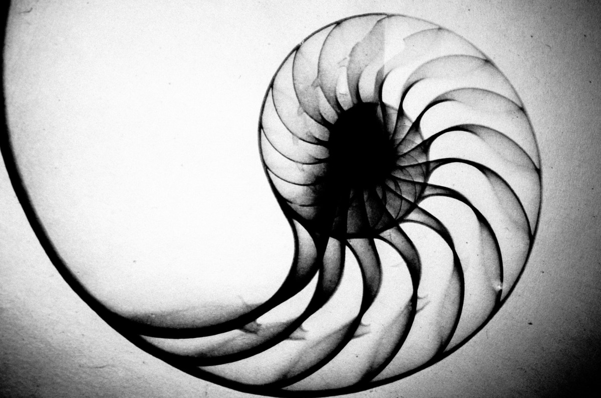 eric kim photography black and white hanoi-0009910 spiral fibonacci shell