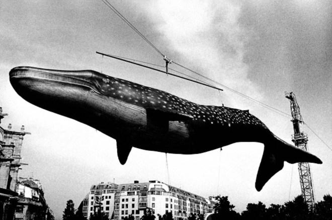 daido-whale