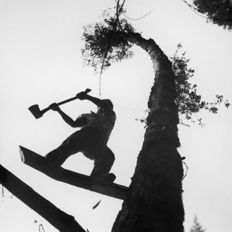 To persevere through the apprenticeship phase, you need to consider yourself axing away at a tree. You can't just chop it down in one blow-- but with many meditated blows. Photograph by George Silk