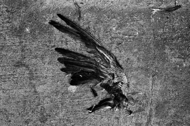 bird2013-07-03_1448
