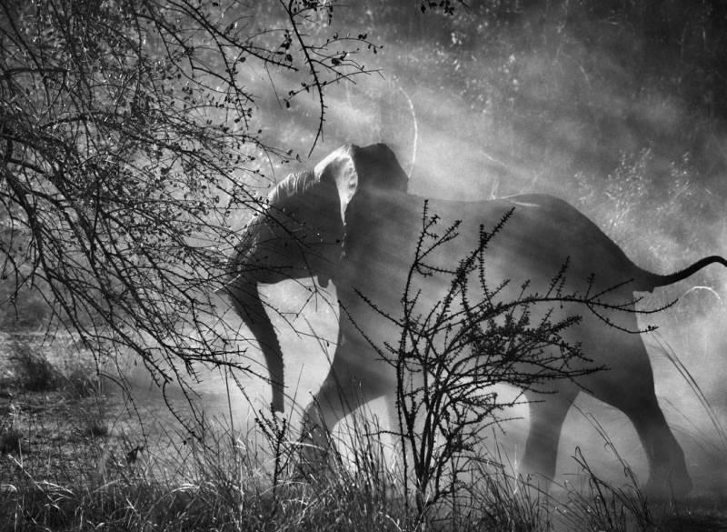 sebastiao Salgado elephant genesis