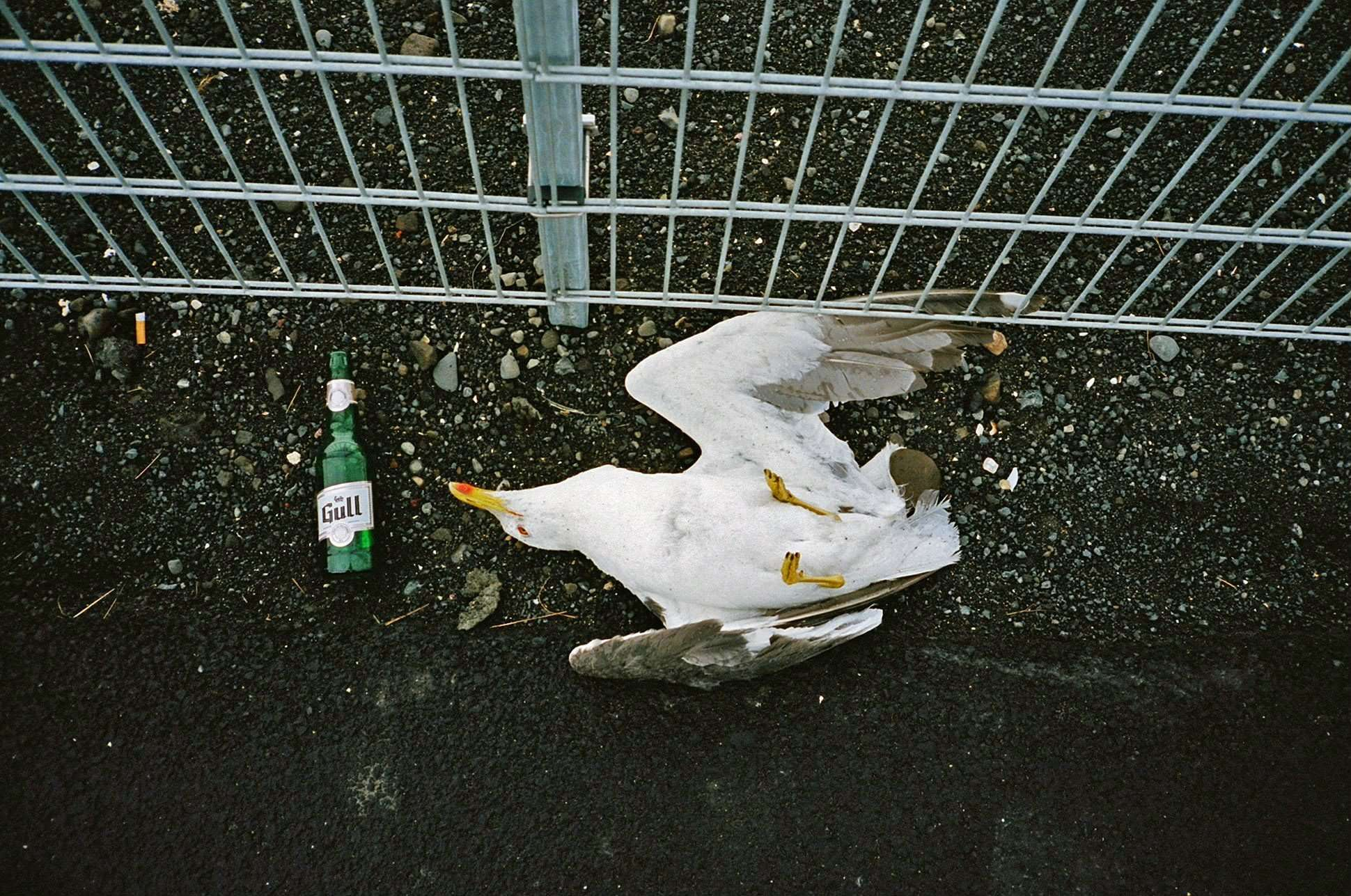 stephen-leslie-gull-beer
