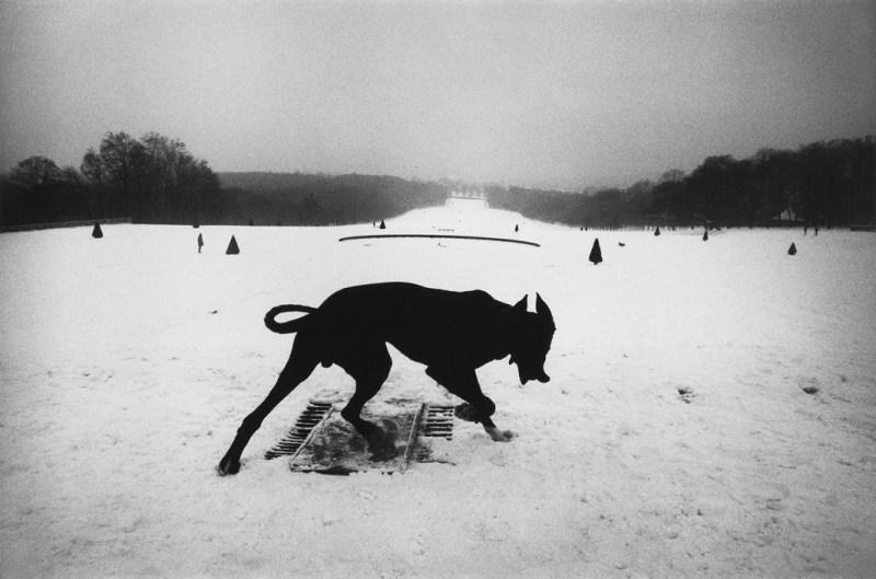(c) Josef Koudelka / Magnum Photos. FRANCE. Hauts-de-Seine. Parc de Sceaux. 1987. - dog devil silhouette