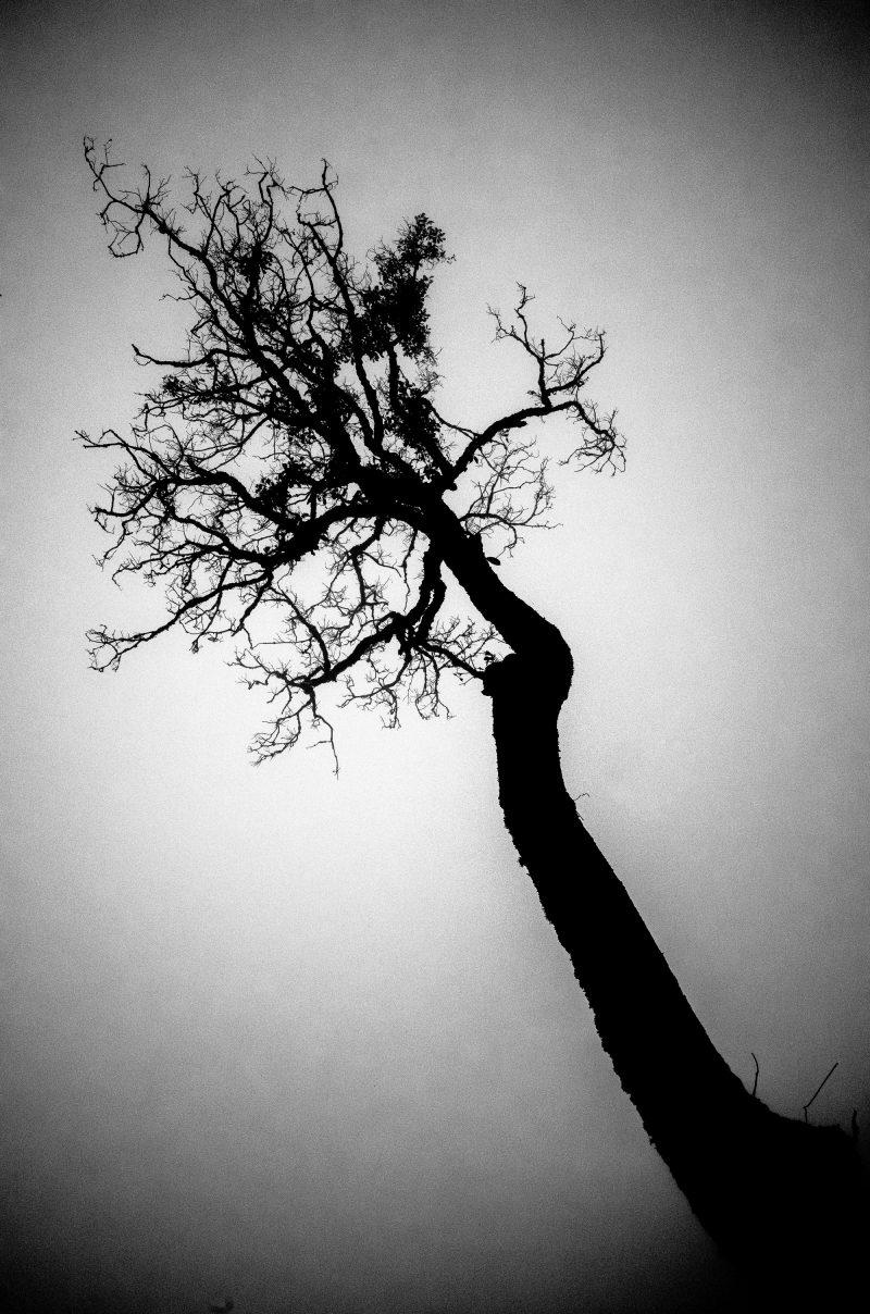 eric kim photography composition diagonal01