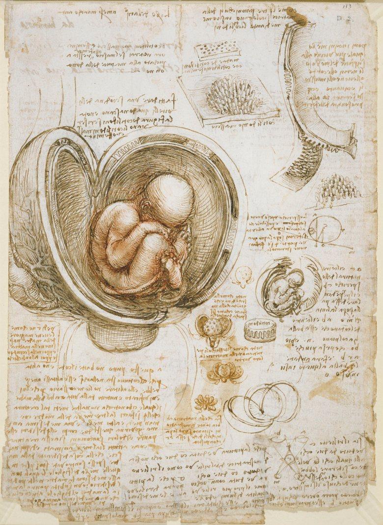 Leonardo_da_Vinci_-_Studies_of_the_foetus_in_the_womb