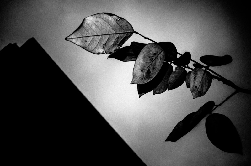 eric kim photography black and white leaves flash