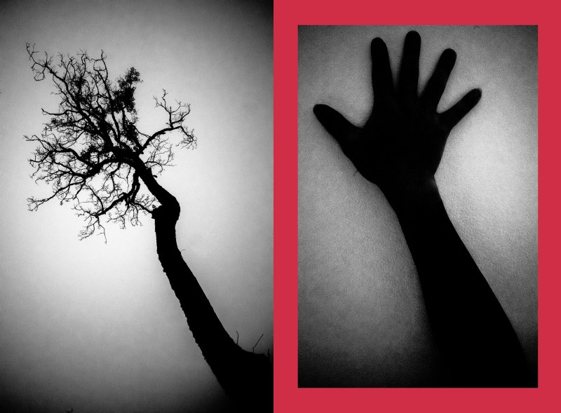 small-tree and hand