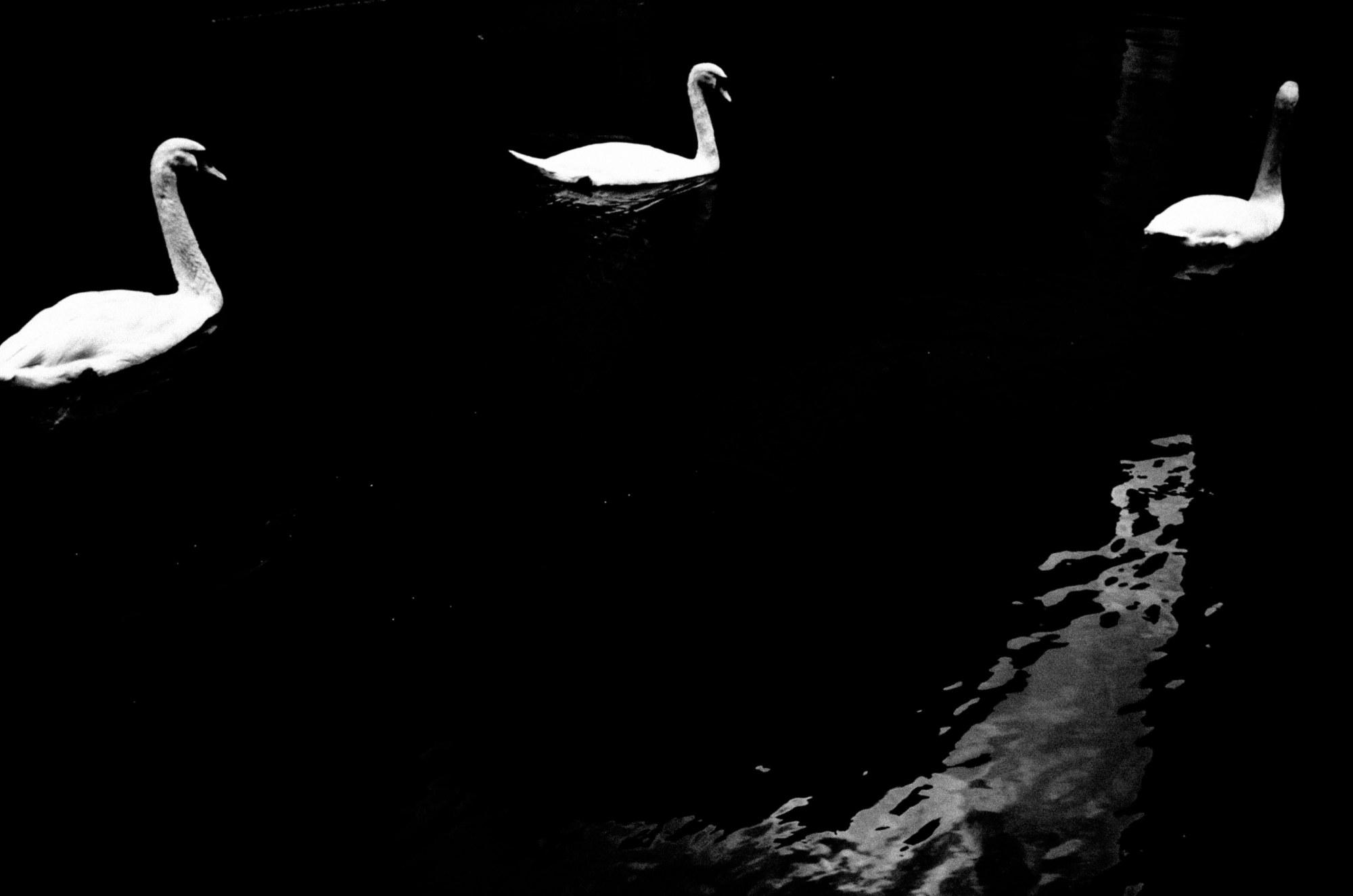 Eric kim photography Kyoto black and white zen swan