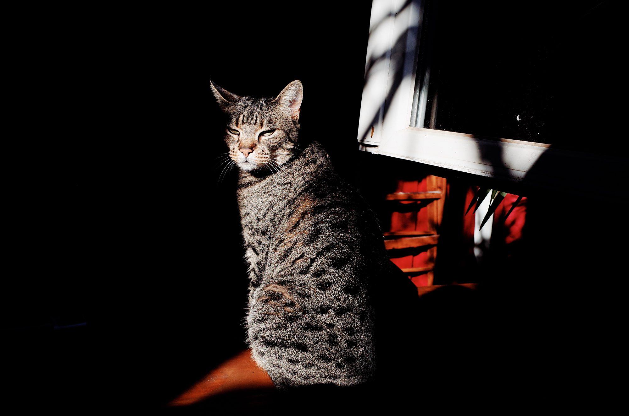Callisto, our cat. Marseille. 2017