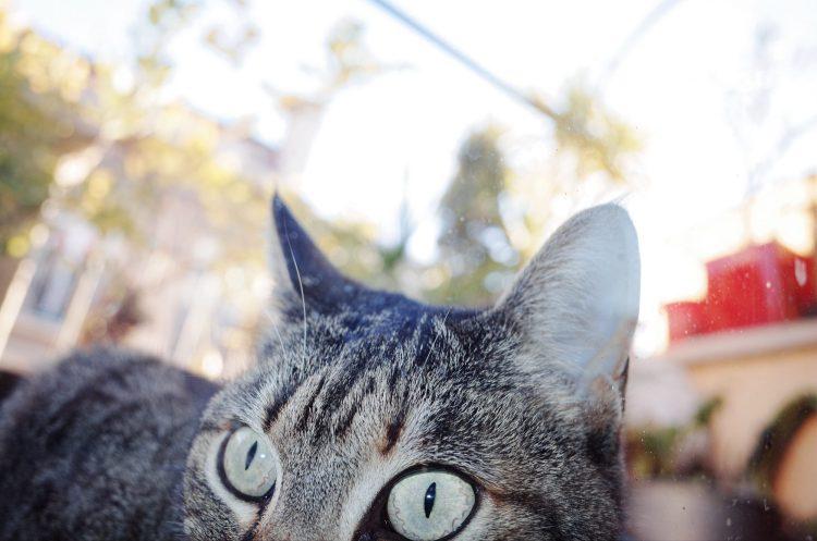 Callisto cat eyes. Shot in macro mode. Marseille, 2017