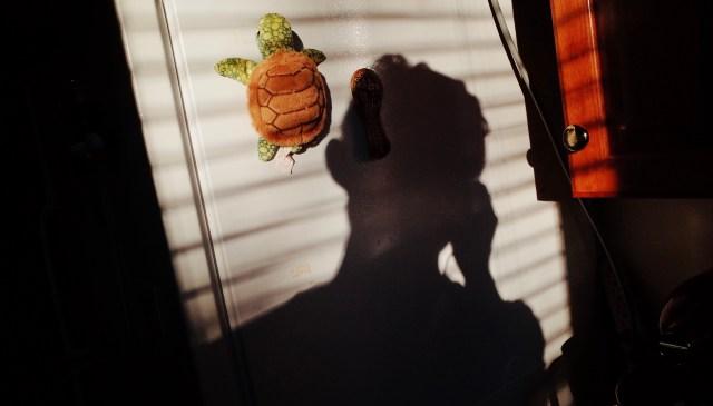 selfie refrigerator, turtle, 2018, boston
