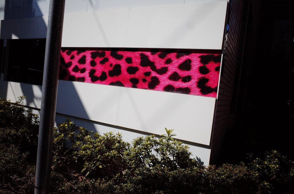 Pink zebra print