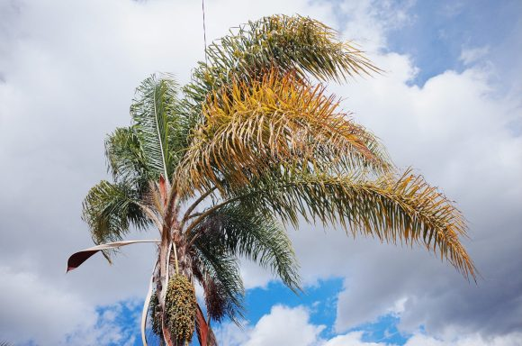 Palm tree. Orange County, 2018