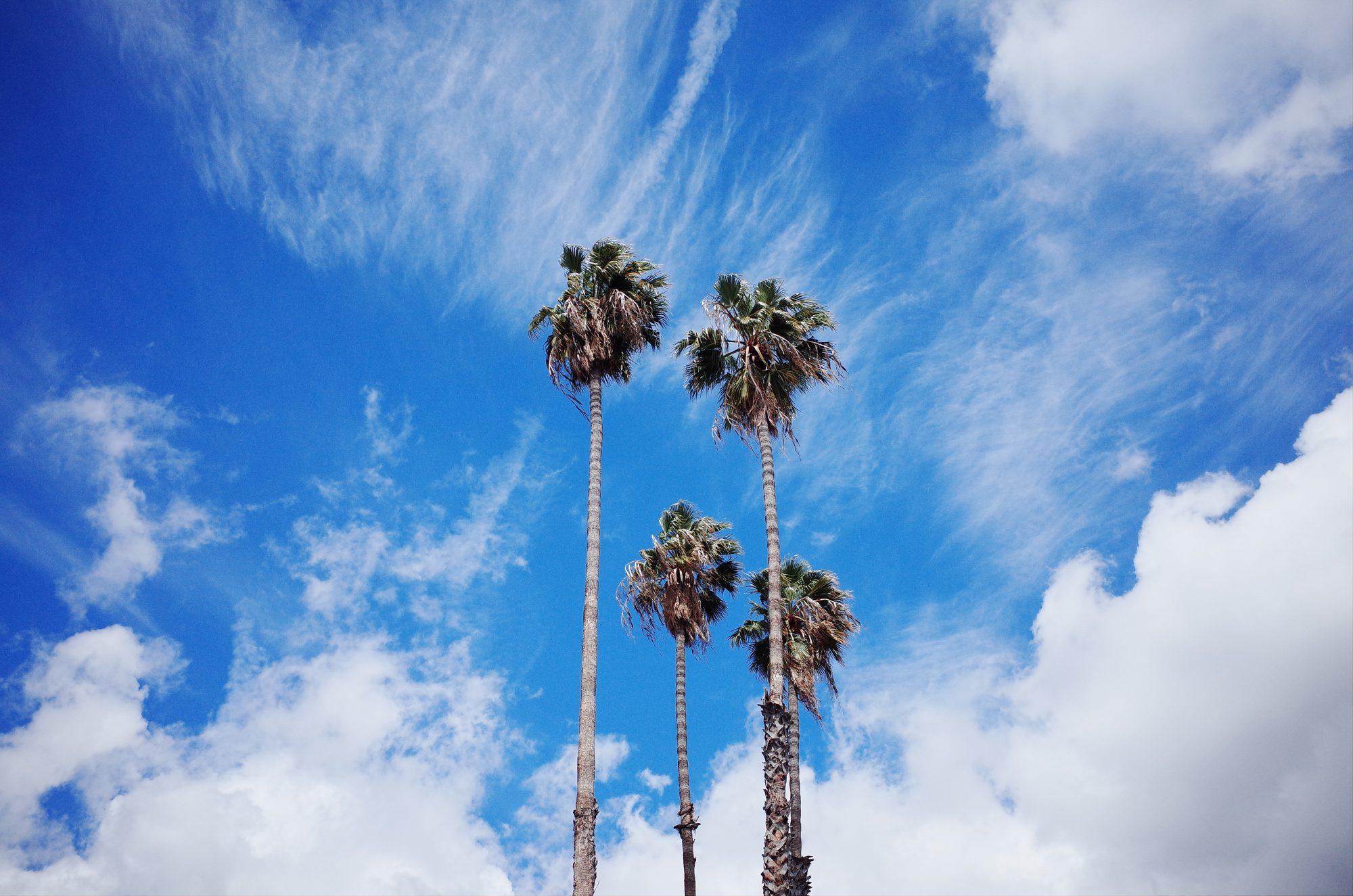 Palm trees. Orange County, 2017