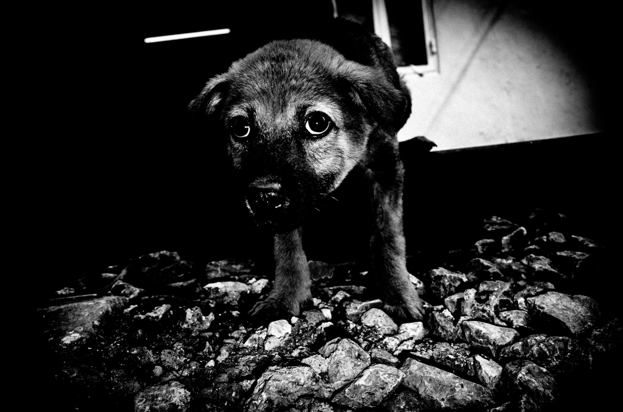 eric kim photography black and white dog puppy-0011682