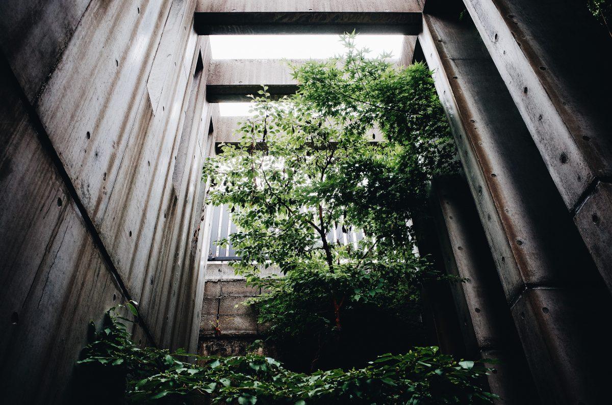 Tree omotesando Zen green architecture
