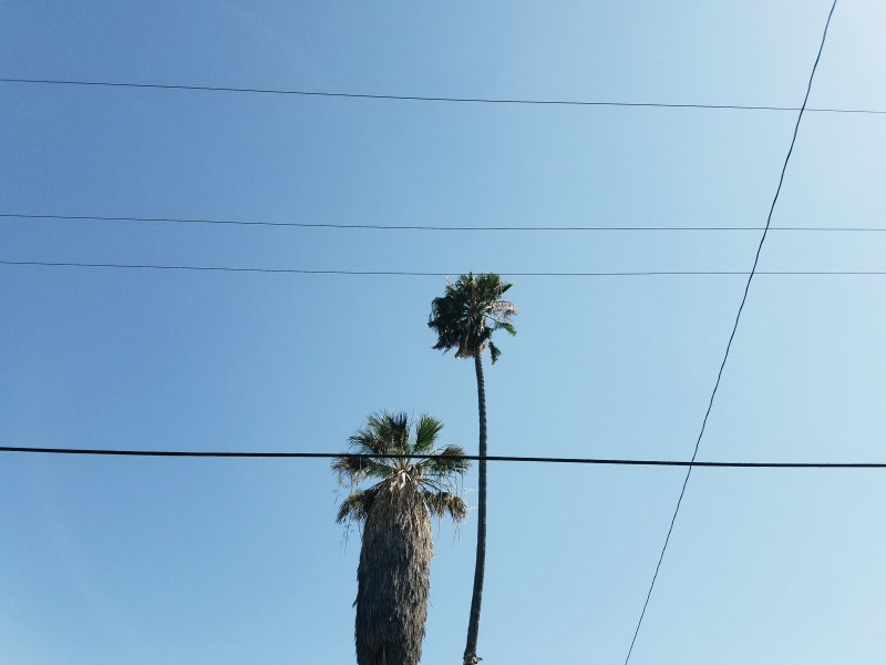 minimalist palm trees