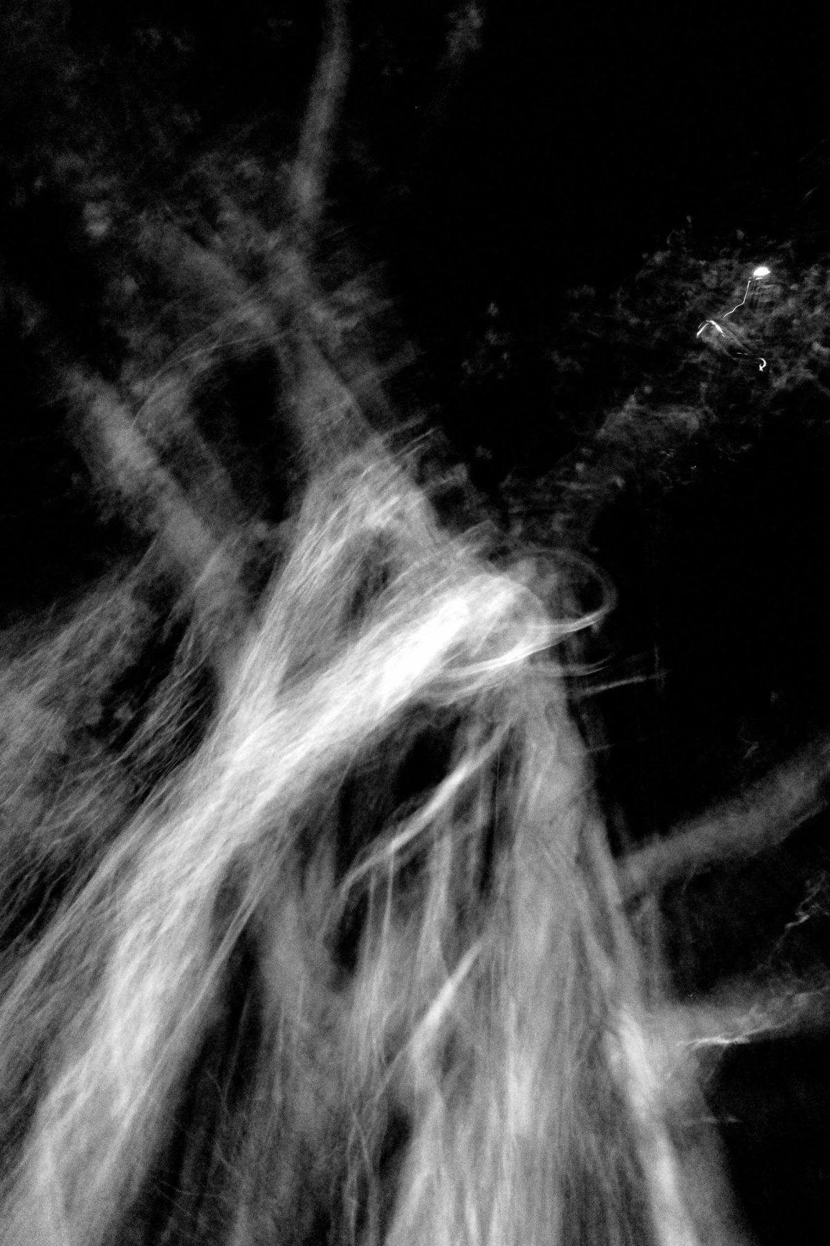tree blur