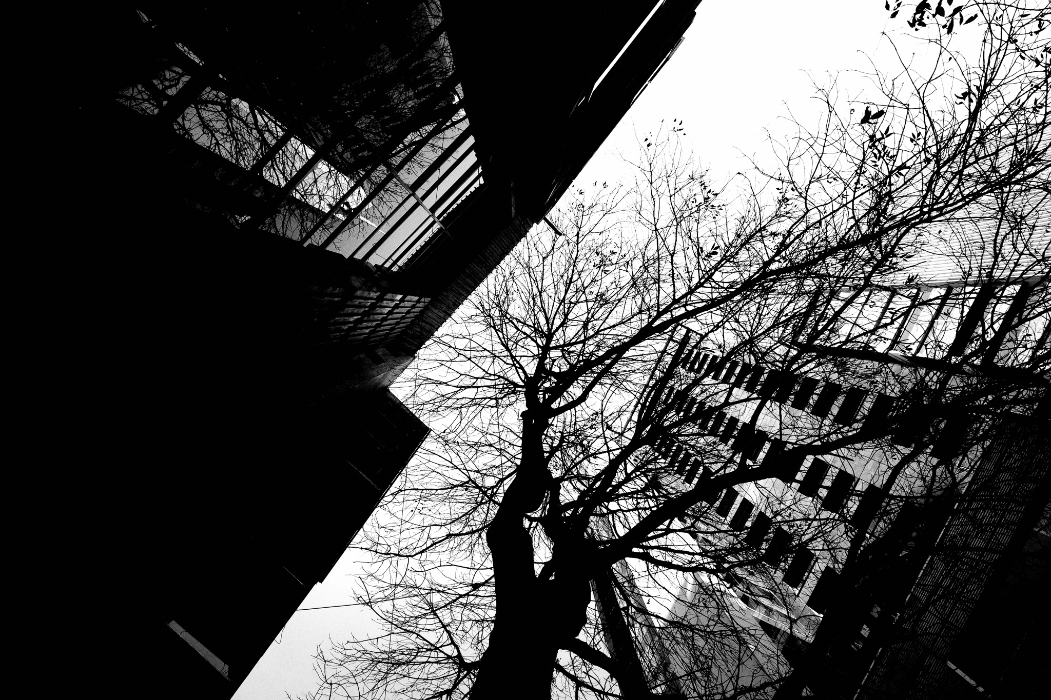 tree skyscraper