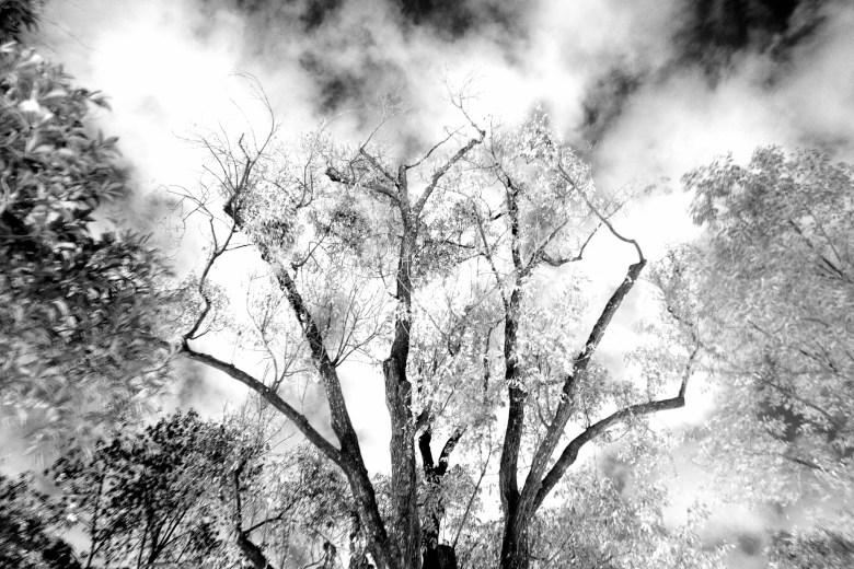 trees transcend above