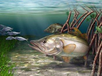 Snook art digital painting from Mark Erickson, marine life artist