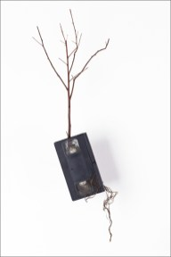 © Eric Le Maire, Expériences botaniques, VHS