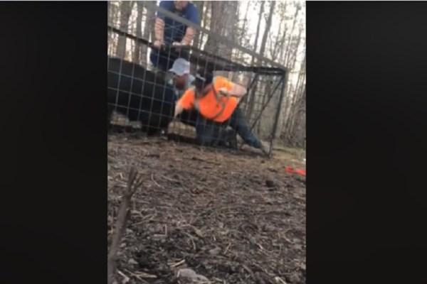 hog trapping fail