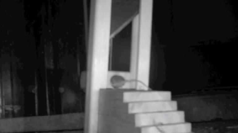 guillotine trap
