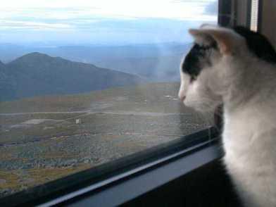 Nin window