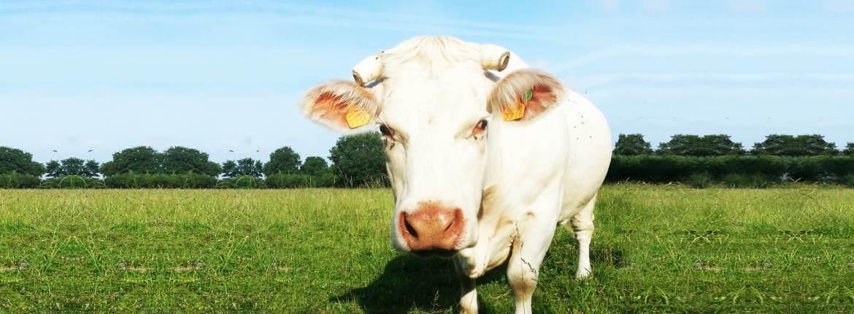 Vente directe de colis de viande de qualité