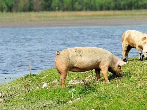 e8b10c20665 Viande en ligne - Commande viande en ligne en direct de l éleveur